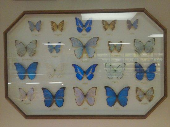 Stones 'n Bones Museum: pretty butterfly display