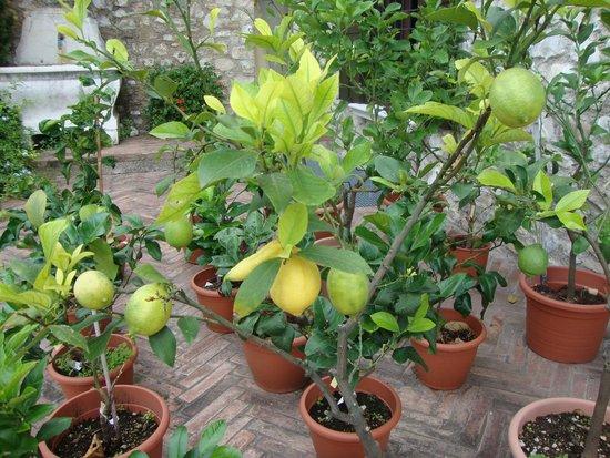 Dimora Bolsone: Lemons