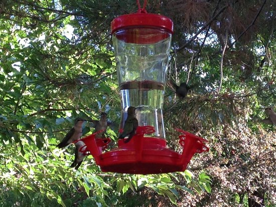 Harvest House Bed and Breakfast : Hummingbirds!