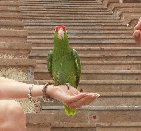 Park Las Aquilas Jungle Park : Lovely birds...
