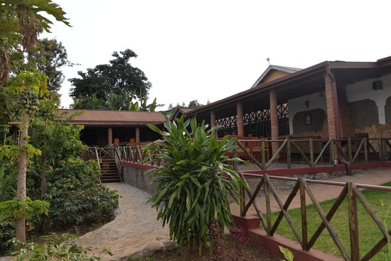 Ambureni Coffee Lodge: Les terrasses