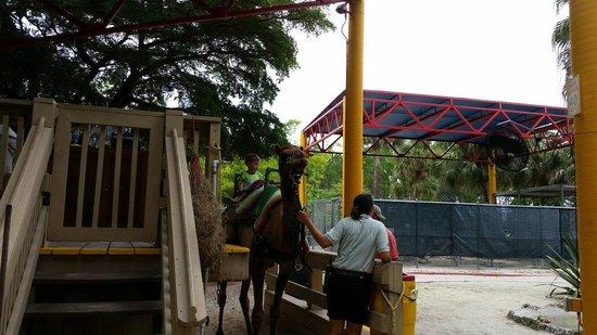 Zoo Miami: Camel ride