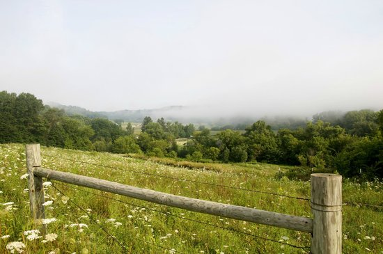 Kickapoo Valley Ranch Guest Cabins: moring fog
