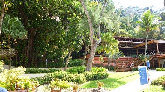 Rea de alberca y restaurantes picture of sheraton grand for Alberca restaurante