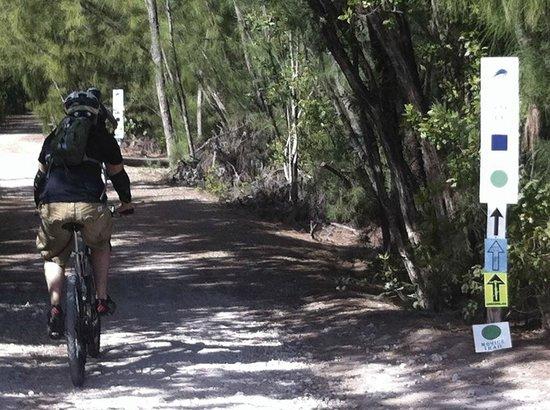 Oleta River State Park : Los senderos de bicicleta son un clásico del Oleta River Park