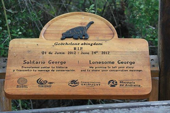 Charles Darwin Research Station: George