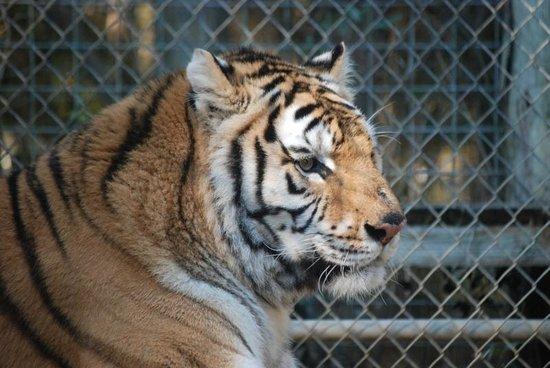 Endangered Animal Rescue Sanctuary