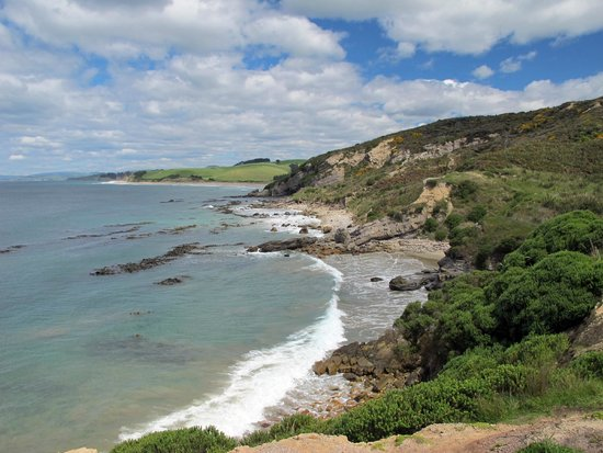 Image result for Shag Point