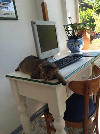 Hotel Pupetto: The Hotel cat takes a nap!