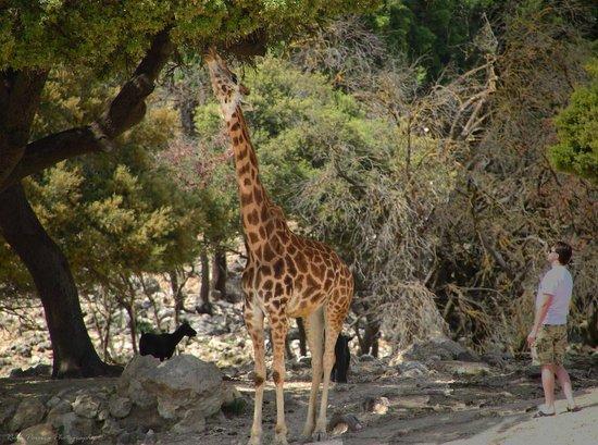 Foto de Safari Aitana, Peñáguila: bebe - TripAdvisor