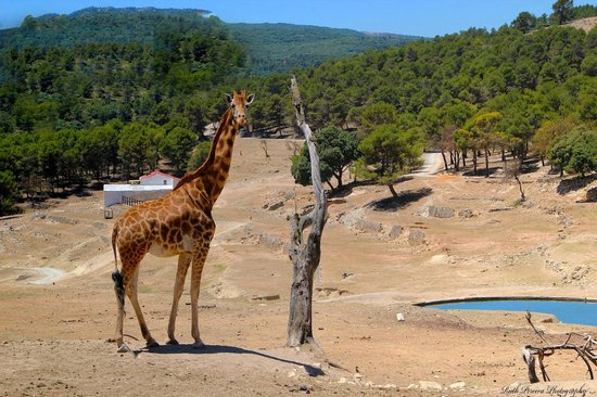 1 - Picture of Safari Aitana, Penaguila - TripAdvisor