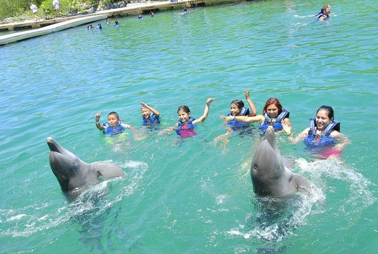 Parc Xel-Ha : swim with the dolphins