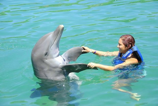 Parc Xel-Ha : dancing with the dolphin