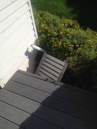 The Edgewater Inn: Table thrown in bushes outside room