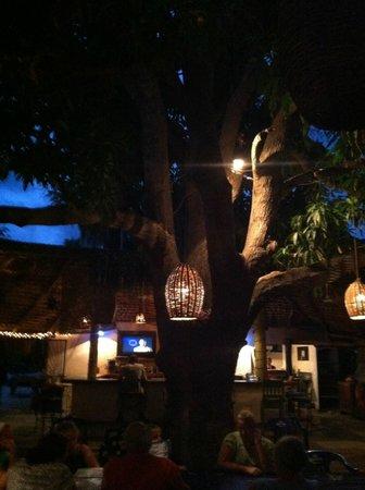 Ruby Sandbar : Big tree inside