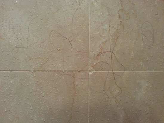 Monterey Plaza Hotel & Spa: Hairs on the shower wall that from previous guest!!