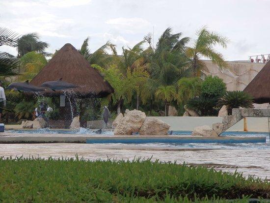 Wet'n Wild Cancun : Les Dauphins