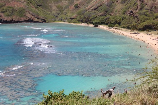 Hanauma Bay Nature Preserve: The Reef!