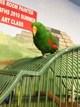 Black Hills Parrot Welfare & Education Center: This is Willie