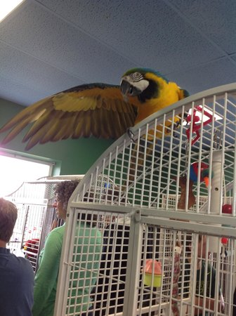 Black Hills Parrot Welfare & Education Center: Scooby