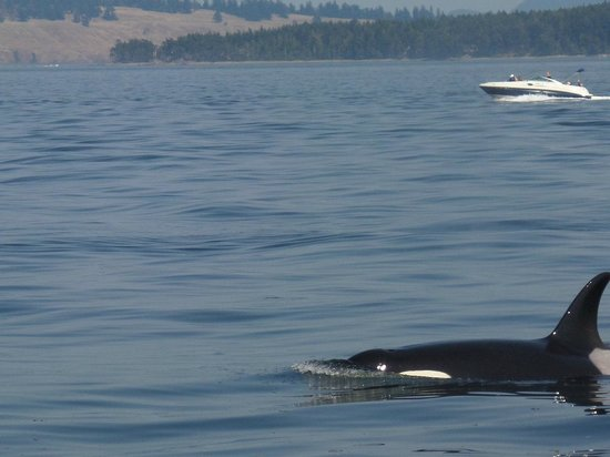Orcas Island Eclipse Charters : beautiful day