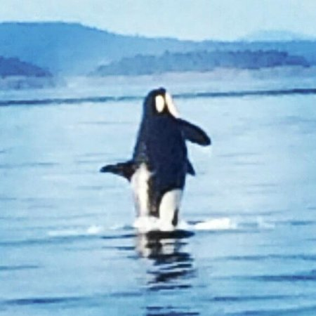 Orcas Island Eclipse Charters : At the end we saw a few jump.