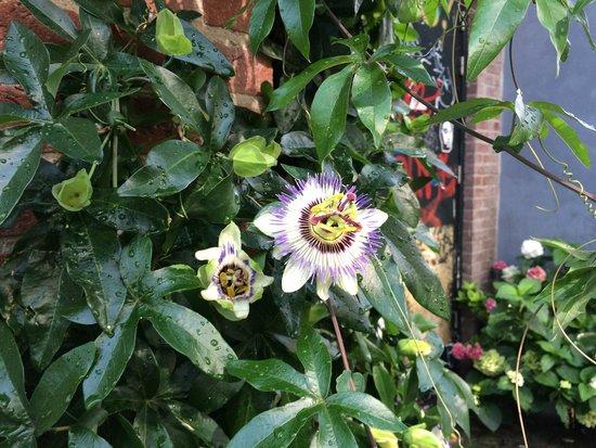 Jordaan : las flores siempre presentes