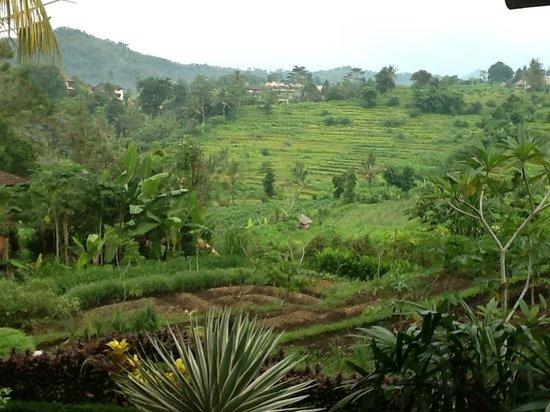Subak Tabola Villa: view