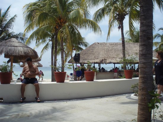 Oasis Palm: .