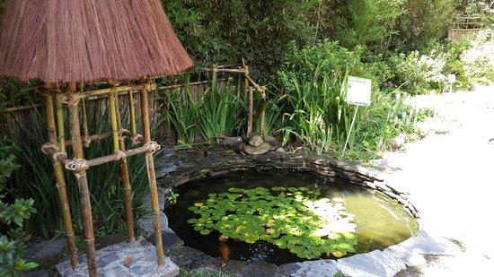 Jard n japon s picture of jardines ecologicos topotepuy for Jardin japones