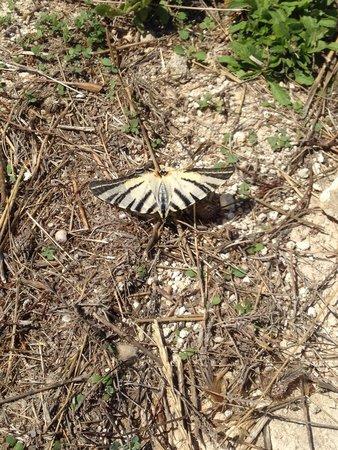 Porto Giardino Resort: Fa più rumore una farfalla che tutto il gruppo di animatori del villaggio!!!!