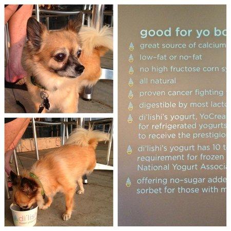 Di'lishi frozen yogurt bar: health benefits for pets