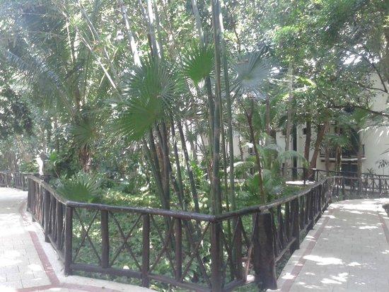 The Reef Playacar: jardines