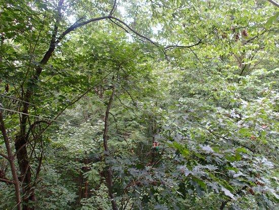 Tree Frog Canopy Tours Zipline: a zip
