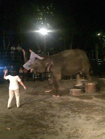 Elephant Safari Park & Lodge: Elephant Show