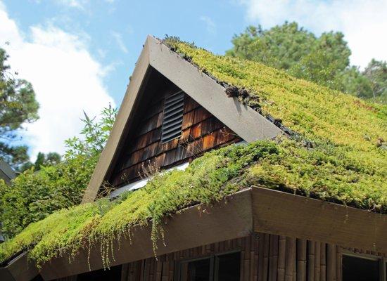 Norfolk Botanical Garden: Unique Roof Cover