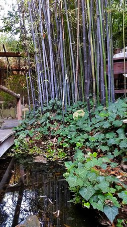 Ranch House: Seating among tall bamboo