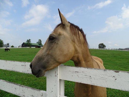 Kentucky Horse Park : horses park