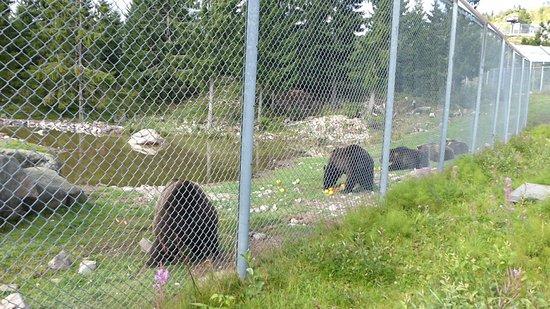 Orsa Bjornpark : Il pasto degli orsi