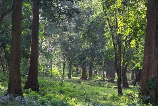 Tranquil Resort: Nearby Muthanga wildlife sanctuary