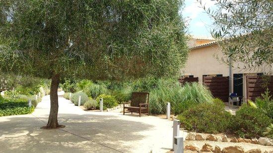 Hilton Sa Torre Mallorca: Natur pur
