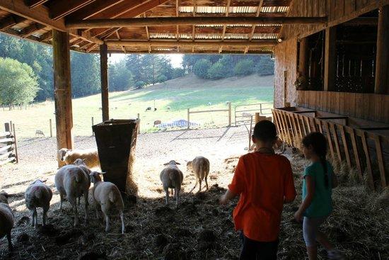 Leaping Lamb Farm: On the farm...