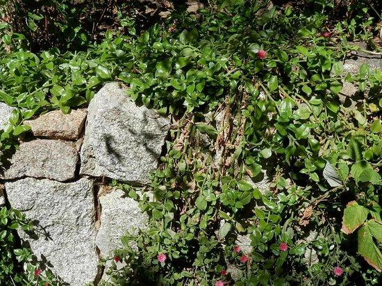 Domaine Pero Longo : Plantes grasses dans les rocailles