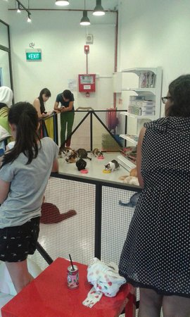 The Cat Cafe: Feeding Time