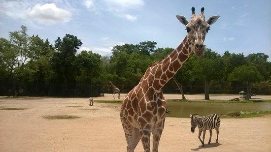 Safari Park Open Zoo : Safari Bus