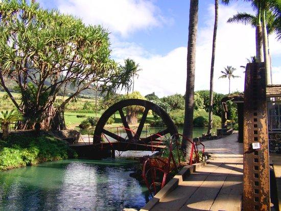 Maui Zipline Company: Beautiful area.