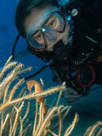Dive Timor Lorosae: Seahorse at Tasi Tolu