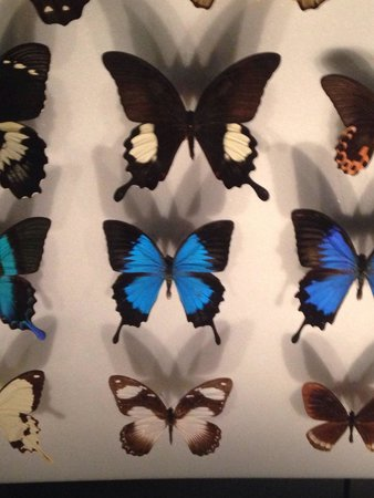 Museum of Natural History: Galerie des papillons