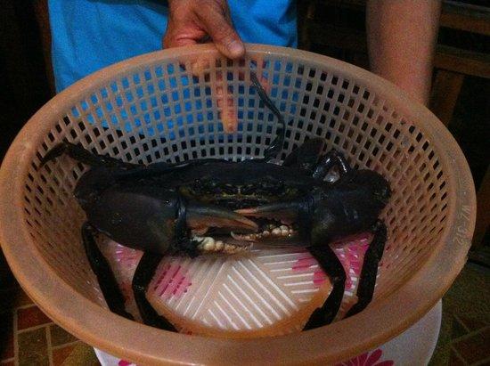 East Coast White Sand Resort & Recreation Center: Choix du crabe avant le repas !