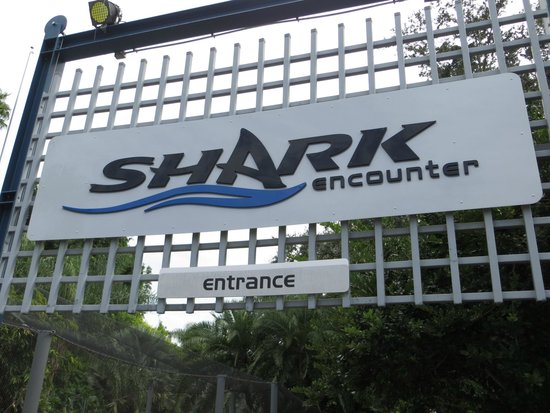 SeaWorld Orlando: Shark Encounter